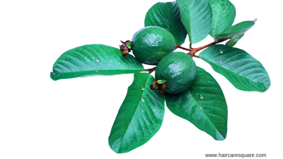 Benefits of Guava leaves for hair